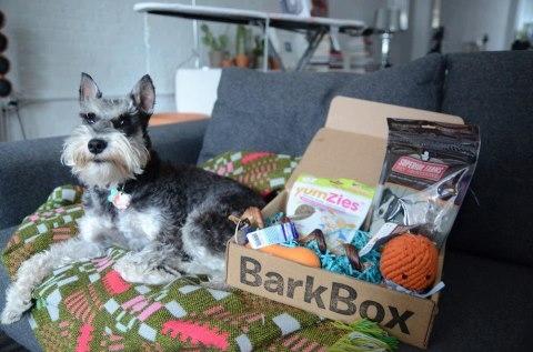 barkbox fundraiser leash animal welfare society. Black Bedroom Furniture Sets. Home Design Ideas